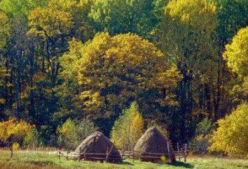 """""""Bryansk Forest"""" – ein Biosphärenreservat von der UNESCO"""
