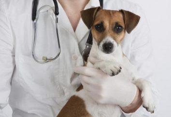 Service de sauvetage d'amis à quatre pattes – une clinique vétérinaire à Minsk