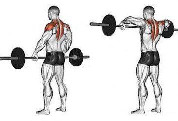 Die Fütterung der Pol stehend: Welche Muskeln arbeiten?