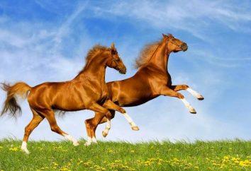 Ksywka konie: lista. Ksywka słynne konie