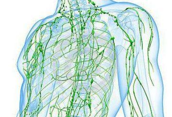 Linfoma follicolare: sintomi, cause, il trattamento. Il periodo di remissione e ricaduta linfoma follicolare
