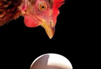 Interpretação dos sonhos: sonhar com o que galinhas