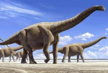 Czy wiesz, co jest największym dinozaurem na świecie?