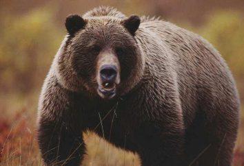 Condividi ucciso la pelle dell'orso: l'importanza di proverbi, interpretazione