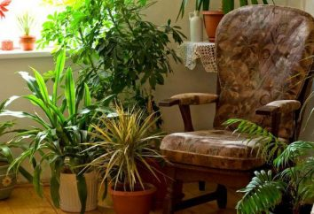 D'après ce que nous pouvons pour faire de l'engrais pour plantes d'intérieur à la maison?