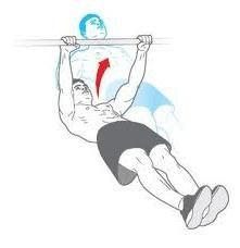 L'utilisation de la barre horizontale: quels muscles tout en balançant serrage
