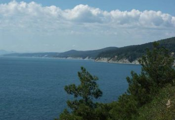 sur les vacances de la mer Noire: la température de l'eau dans Gelendzhik