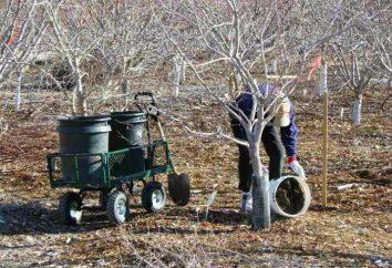 Primavera concimazione alberi da frutto e cespugli. All'inizio alimentazione primavera di alberi da frutto giovani