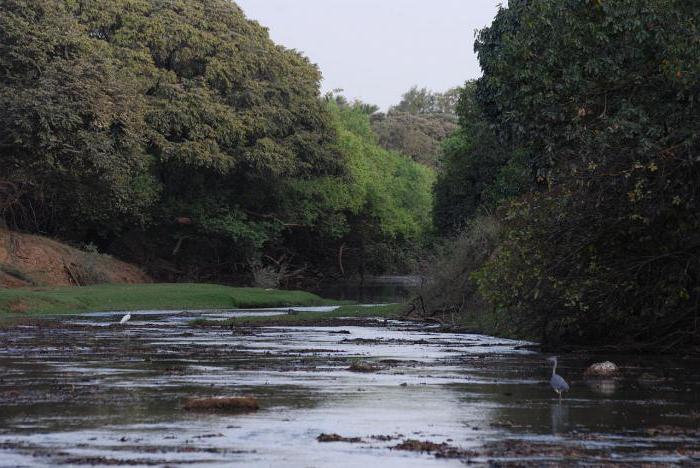 """Résultat de recherche d'images pour """"parc national de l'Arly burkina"""""""