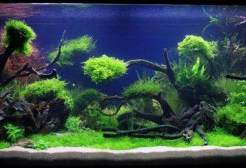 Dekoracje do akwarium: wykorzystanie naturalnych materiałów oraz zasady ich wytwarzania