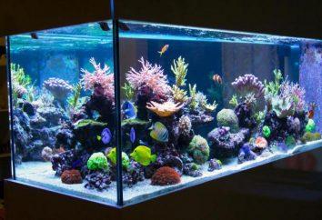 Come avviare un acquario? Riscaldatore per acquario. pulizia del serbatoio a casa