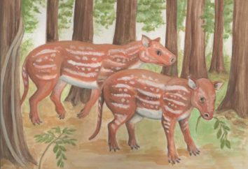 Os ancestrais de cavalos e animais relacionados. Evolução do cavalo