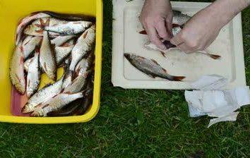 A medida que el pescado salado secado: los pequeños trucos y consejos