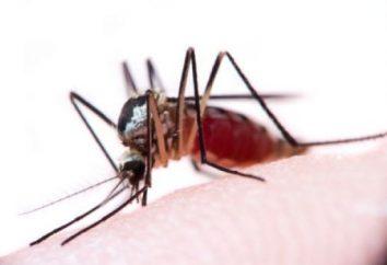 Komar gryzie: rozmaz skóry
