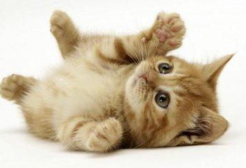 Ein Essay über die Katze: Der Plan des Schreibens