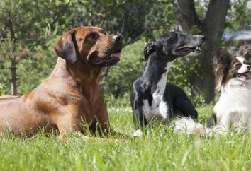 Cómo comportarse cuando es atacado por un perro? ¿Qué hacer? manejador consejos