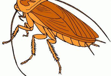 Che visione di scarafaggi in un sogno: un libro dei sogni racconta