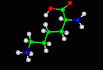 l-lisina: caratterizzazione e applicazione di un determinato aminoacido