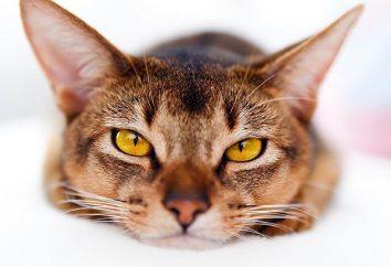 Kot ma biegunkę. Co robić i co znaczy zastosować w tym przypadku,