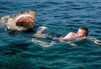 Rekiny-eating: Przyczyny ataków i geografii siedliska. Co zazwyczaj rekiny atakują ludzi?