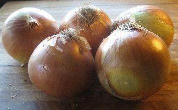 varietà invernali di cipolle. La coltivazione di cipolla invernale