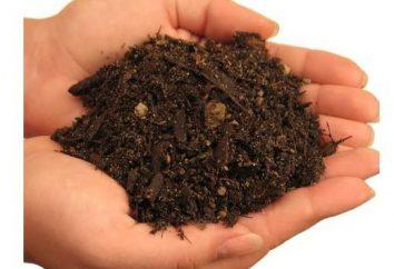 Wie der Boden für die Bepflanzung desinfizieren. Wie Boden für die Bepflanzung vorzubereiten