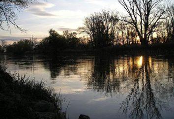 Blue Planet: o que as pessoas fazem para proteger rios e outros recursos naturais?