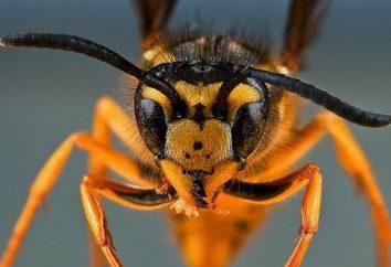 Hymenoptera: descripción, tipos, principales representantes y estructura
