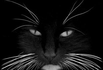 Dlaczego koty wąsy? Jak nazywa wąsy kota?