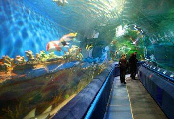 akwarium trzypoziomowy w Petersburgu