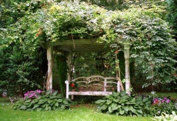 Wie auf den Garten mit Hilfe der Phantasie, Einfallsreichtum und geschickte Hände dekorieren