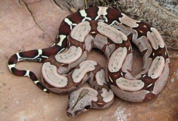 Co węże nadają się jako zwierzęta domowe?