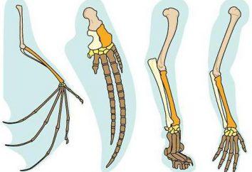 organi omologhi: gli esempi e le prove per l'evoluzione