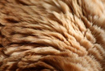 Jak rozciągnąć futro? Praca z futra naturalnego