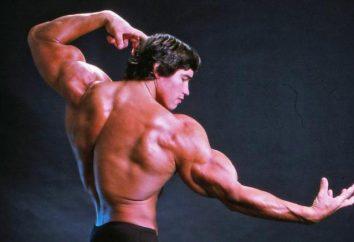 Schwarzenegger dans sa jeunesse. Une brève biographie. Avenue à la renommée