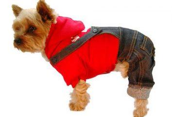Ubranie dla psa – konieczność czy kaprys właścicieli?