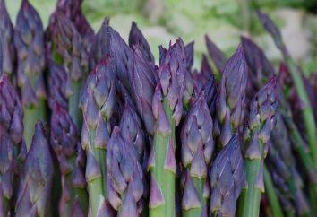 ¿Cómo hacer crecer a partir de semillas de espárragos en el jardín?