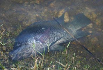 We śnie widziałem ryby: zysk?