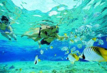 Nurkowanie – co to jest? Najlepsze miejsca do nurkowania