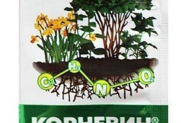 """Oznacza """"Kornevin"""": instrukcje użytkowania"""