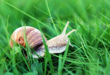 « Big Buster », ou comment se débarrasser des escargots dans le jardin