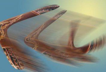 Boomerang efekt w psychologii: definicja, cechy i przykłady