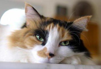Gato tose: causas y consecuencias. Enfermedades Gatos: síntomas y tratamiento