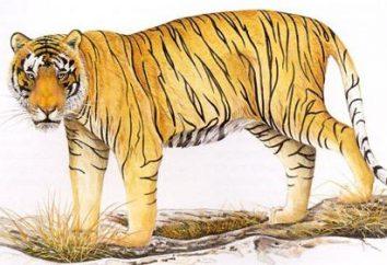 El tigre balinés es una subespecie extinta