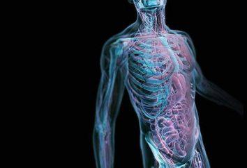 ospite intermedio – si tratta di un organismo in cui un parassita vive e razze