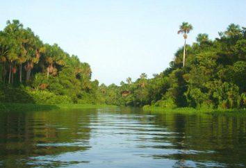 Orinoco – rzeka w Wenezueli
