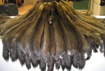 pele de marta: fotos, descrição. Pele de marta e sable – a diferença. Produtos feitos de pele de marta