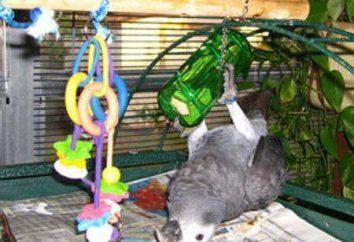 Jak zrobić zabawki dla papug z rękami: przegląd pomysłów, warsztatów i zaleceń