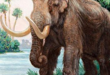 Mastodon – est l'ancêtre de l'éléphant?