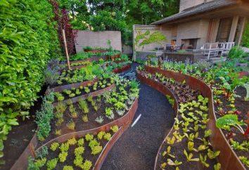 Come pianificare il giardino e il giardino?